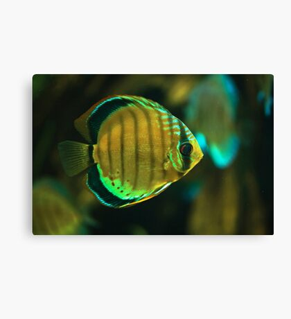 A fish Canvas Print