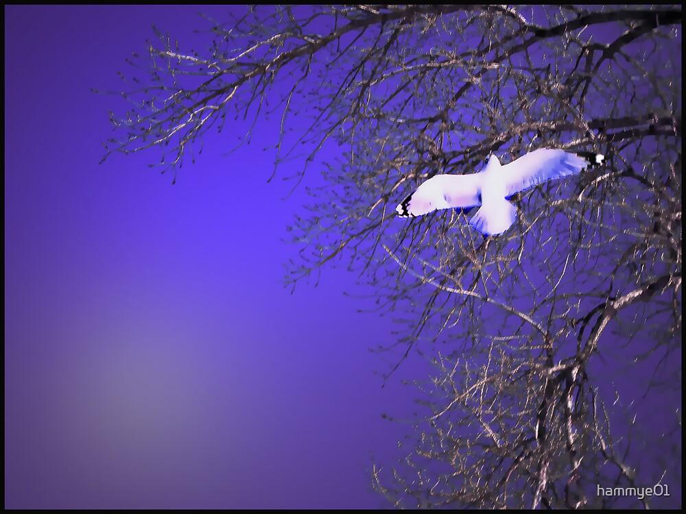 Fantasy Flight by hammye01