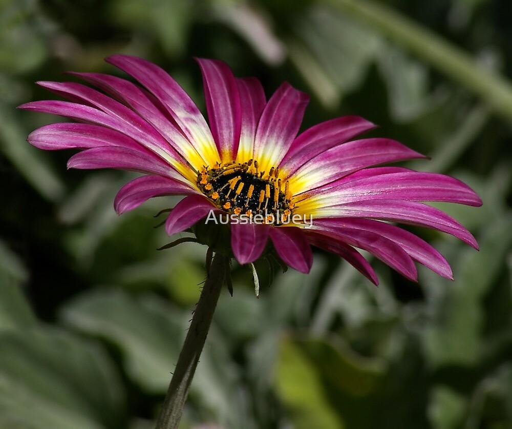 Pink Flower by Aussiebluey