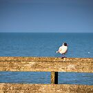 Sitting on the pier fence by JEZ22