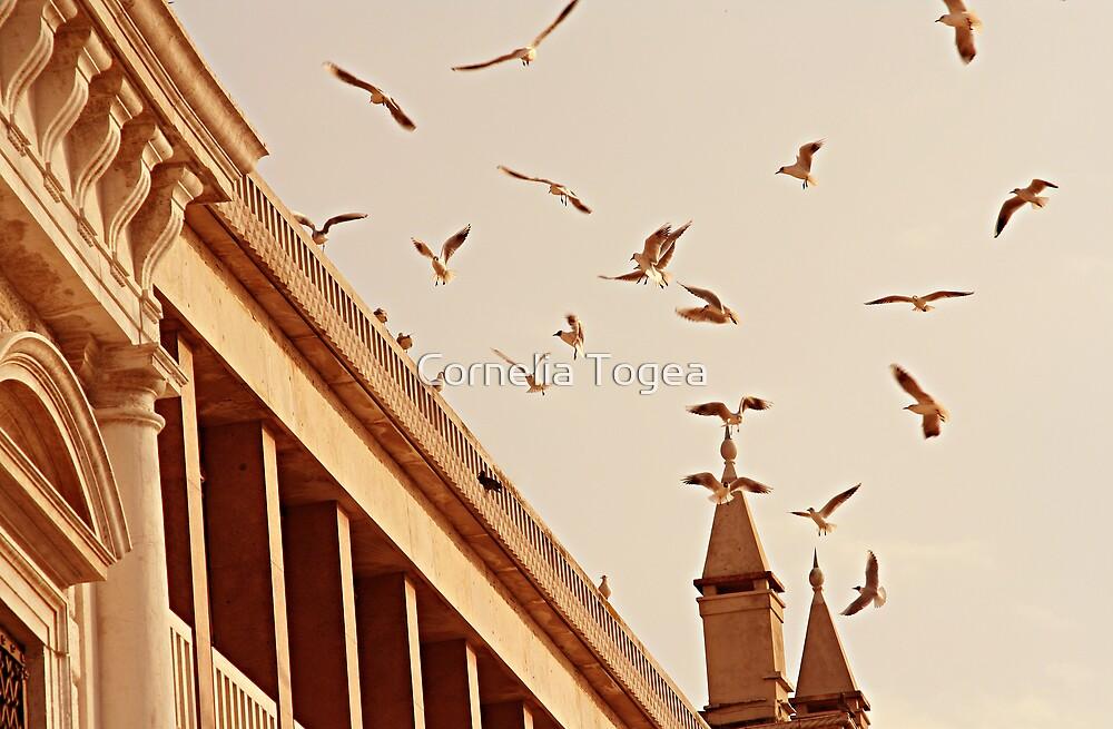 airborne by Cornelia Togea