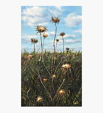 Thorn Fields_Oil on wood Photographic Print