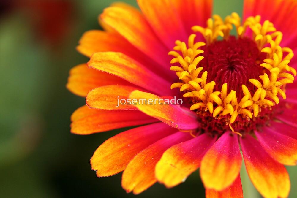 Tipped Flower by josemercado