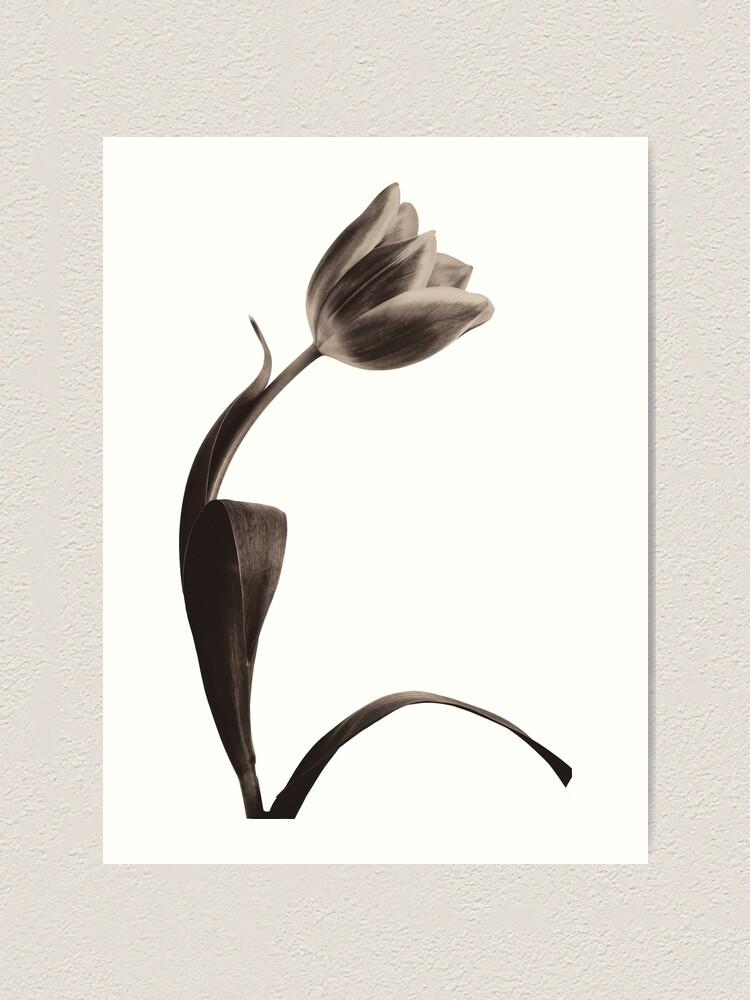 Alternate view of Antique Tulip Art Print