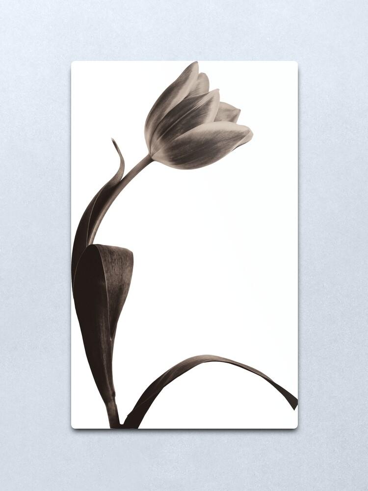 Alternate view of Antique Tulip Metal Print