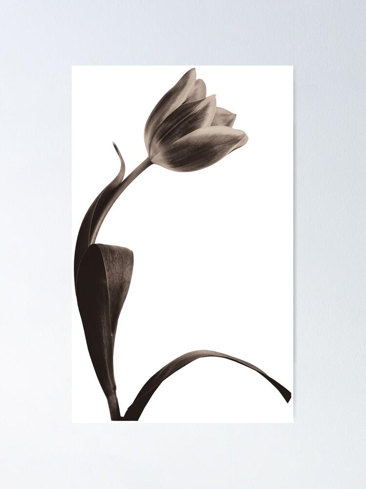 Alternate view of Antique Tulip Poster