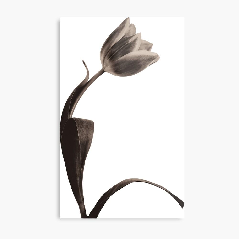 Antique Tulip Metal Print