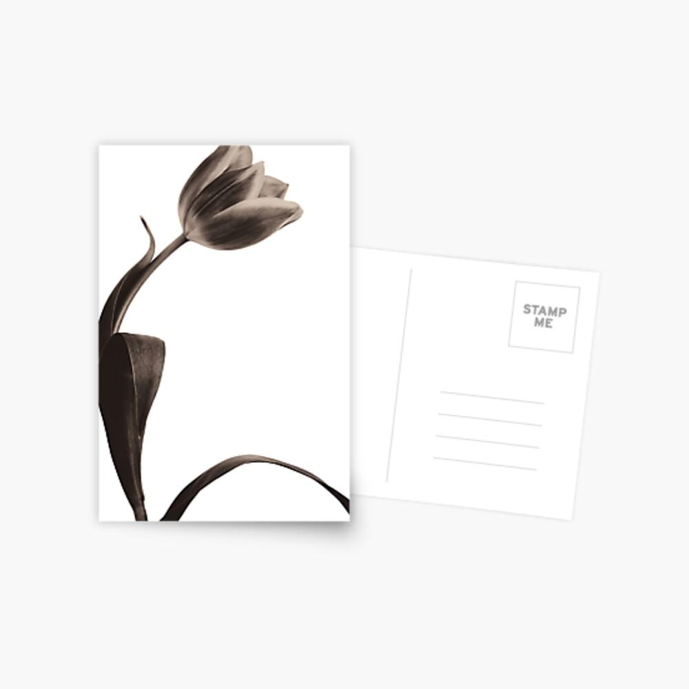 Antique Tulip Postcard