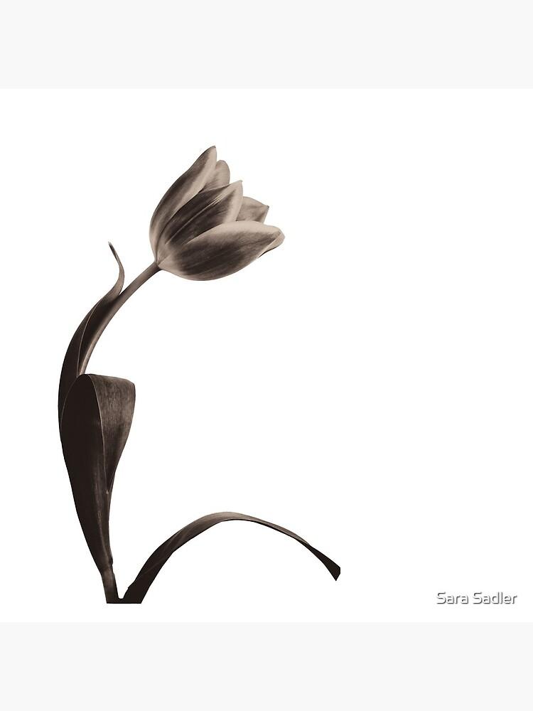 Antique Tulip by sadler2121