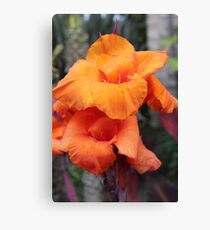 Orange Nasturzi Image By Rich AMeN Gill Canvas Print