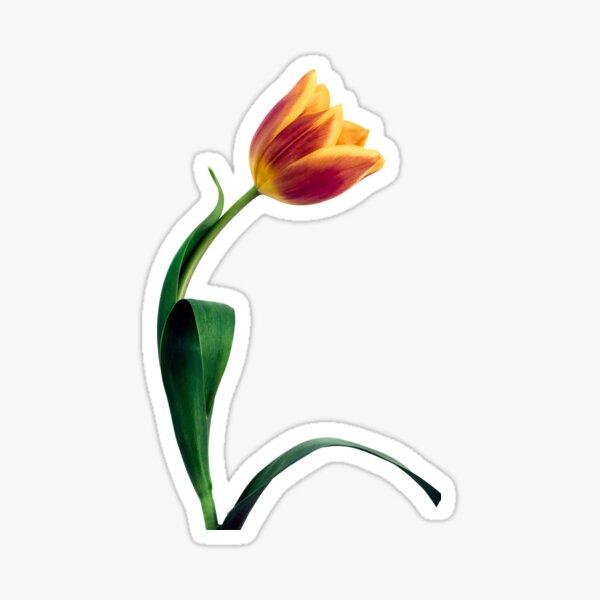 Natural Tulip flower Sticker