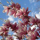 Lavish magnolia by Ana Belaj