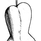 Pear by Ercan BAYSAL