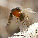 Wind Beneath My Wings by dilouise