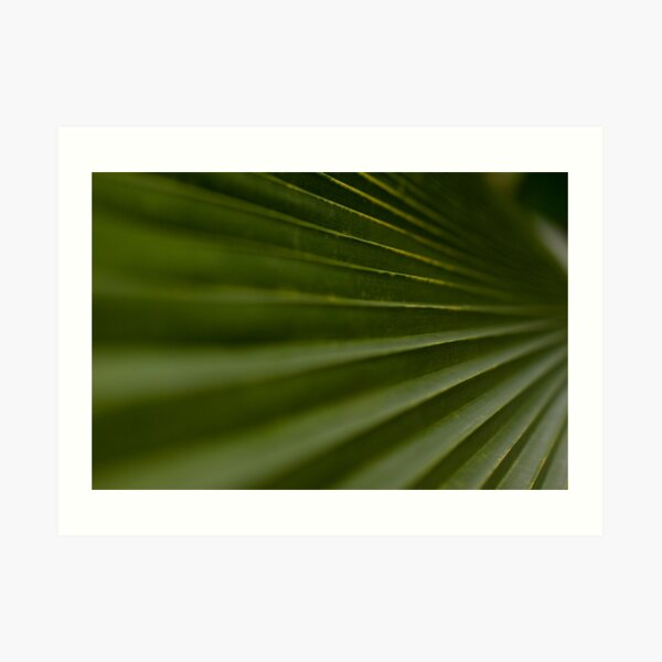 Leaf Steps Art Print