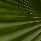 Leaf Steps by Ed Stone