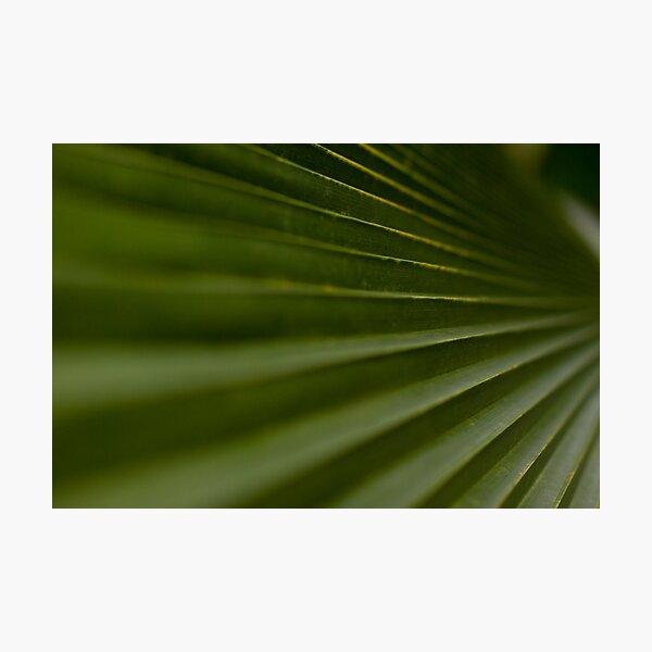 Leaf Steps Photographic Print
