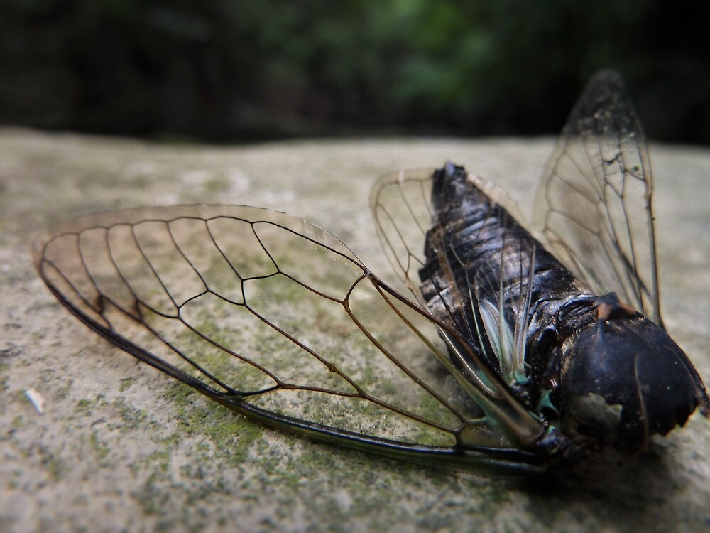 Cicada Body by Phoenixphoxes