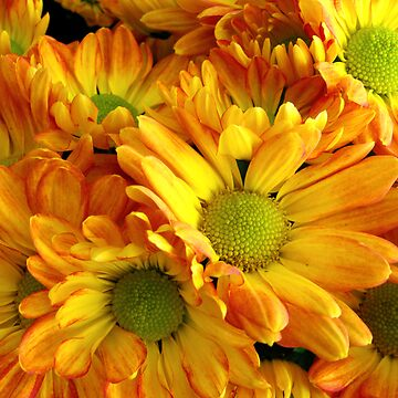 Yellow Daisies by rmartins