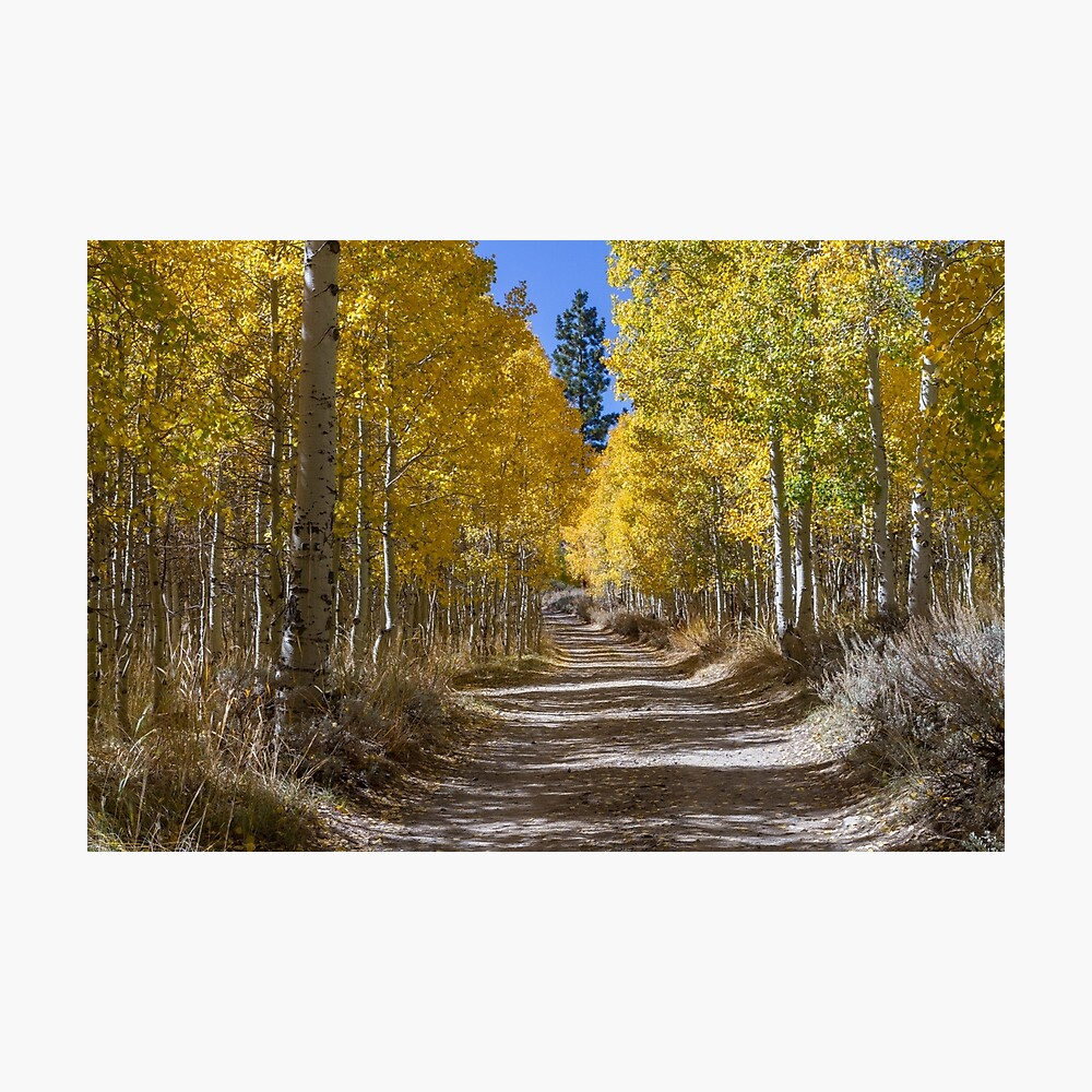 Autumn in the Eastern Sierra Photographic Print