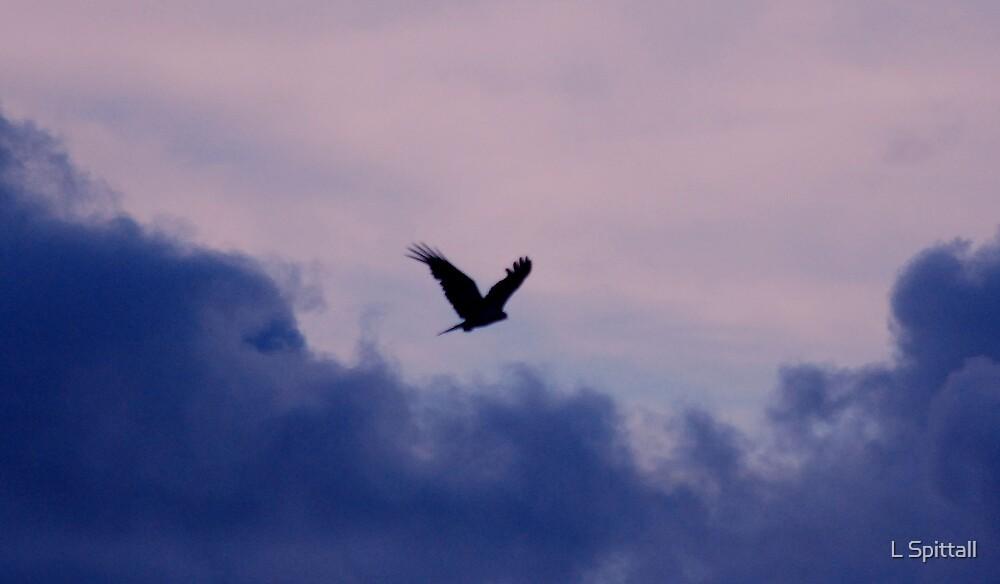 Whistling Kite silouhette by L Spittall