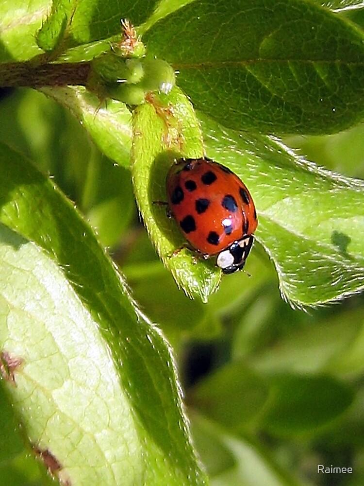 Ladybird Leaf by Raimee