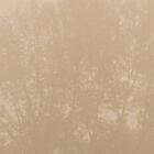 HAZELNUT TREE  by Alessandro Nesci