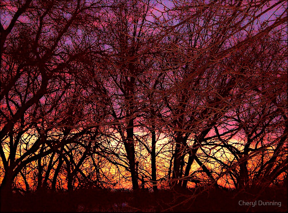 Illustrated trees at sunset by Cheryl Dunning