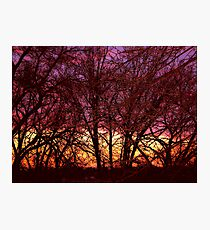 Illustrated trees at sunset Photographic Print