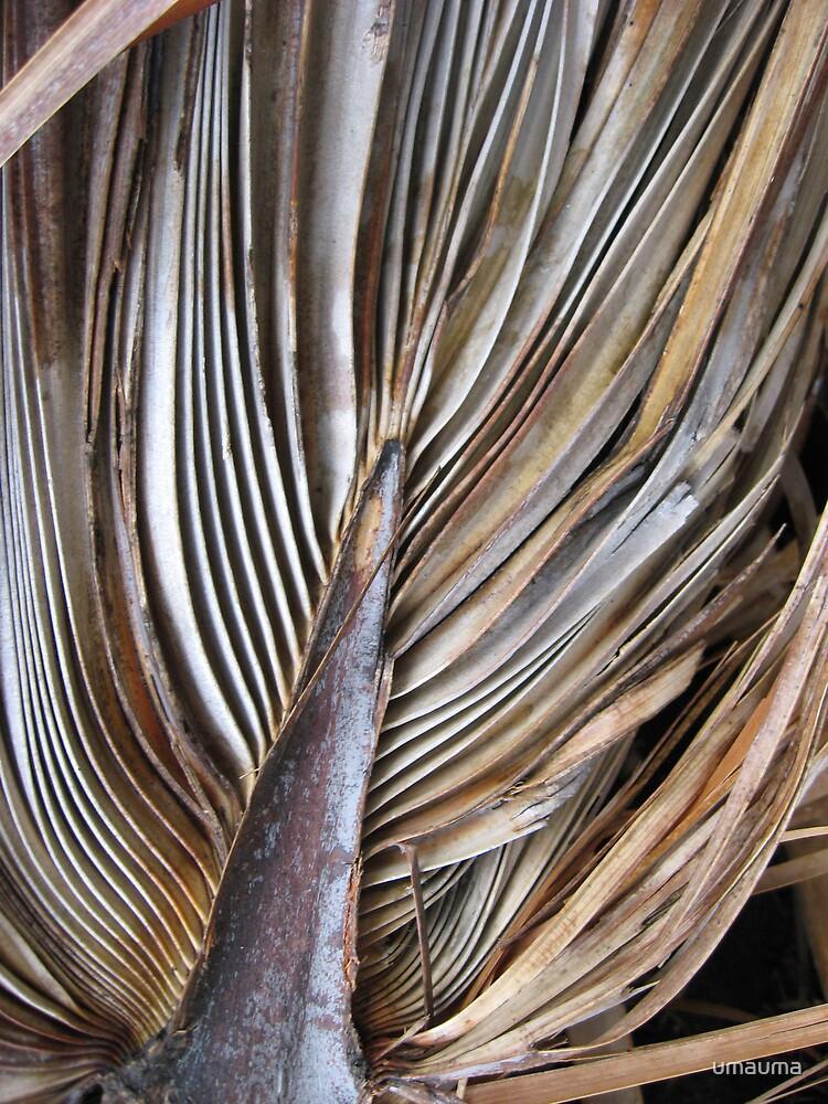 Palm Frond by umauma