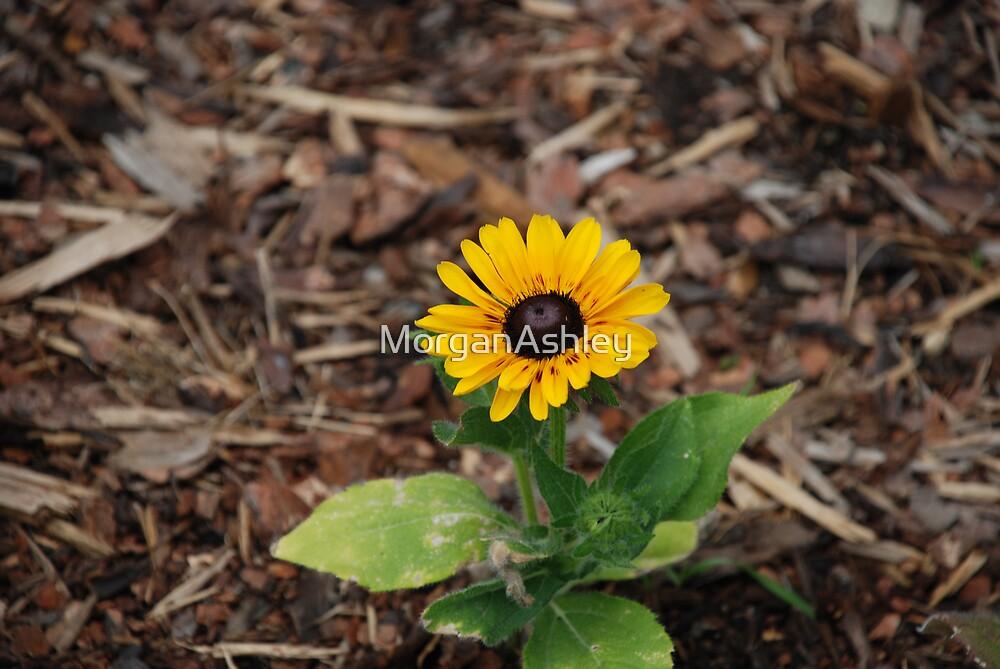 sunflower by MorganAshley