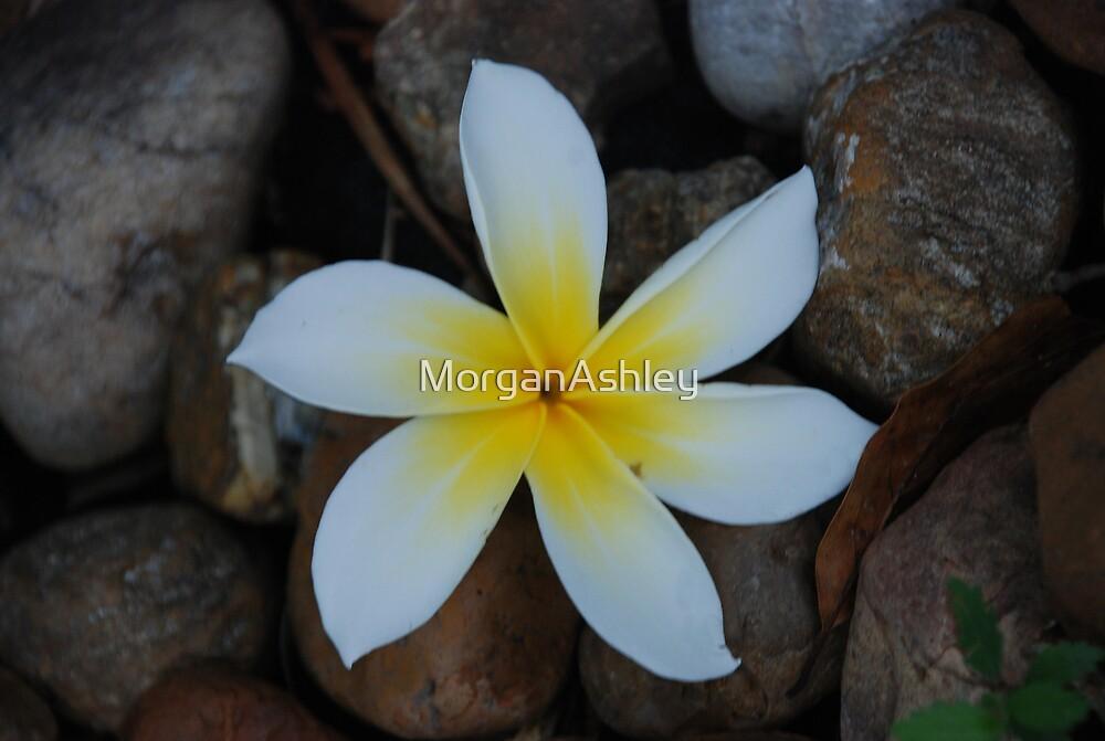Plumaria love 2 by MorganAshley