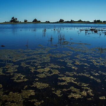 Vernal Pools by sgrace