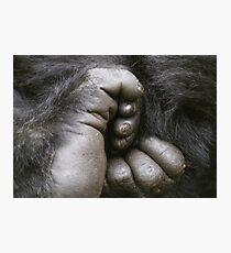 Gorilla Feet Photographic Print