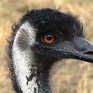 Emu Smile by Coralie Plozza