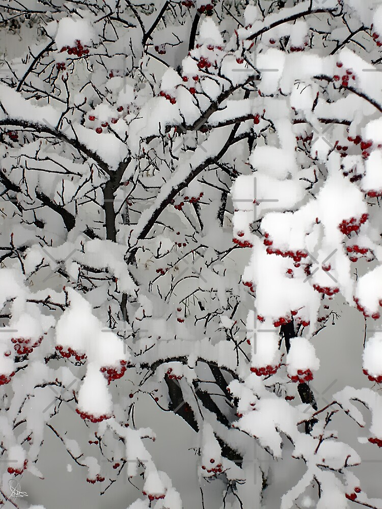 First Snow by Tammy Soulliere