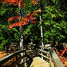 Park Bridge by Tim Denny