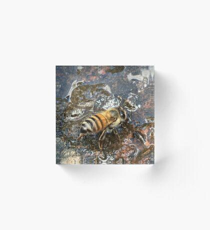 African Bee (Apis mellifera Scutellata) Acrylic Block
