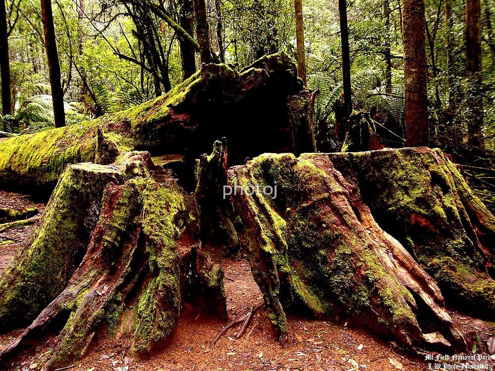 photoj Tas, Mt Field National Park by photoj