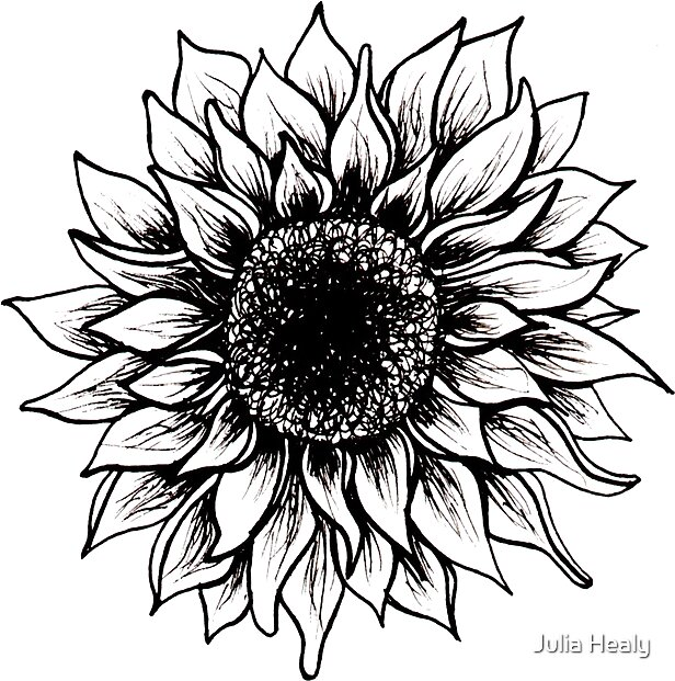 Black And White Sunflower By Juliahealyy