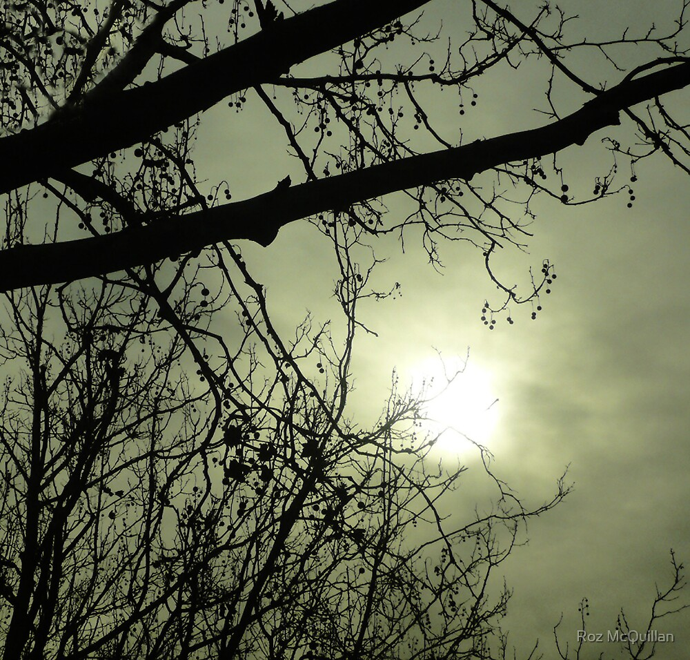 Branches in Mist : photograph  by Roz McQuillan