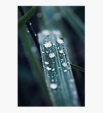 drops with green grass Photographic Print