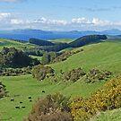 View to Lake Taupo by Graeme  Hyde