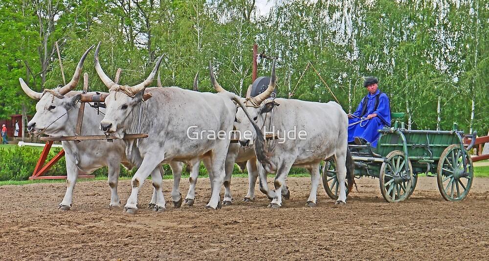 Big Horn Team by Graeme  Hyde