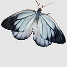 New Butterfly by DAdeSimone
