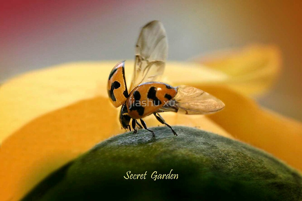 flying ladybird by jiashu xu