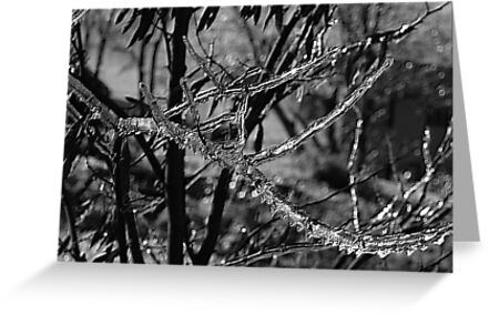 Vectors Of Ice by Tabitha B