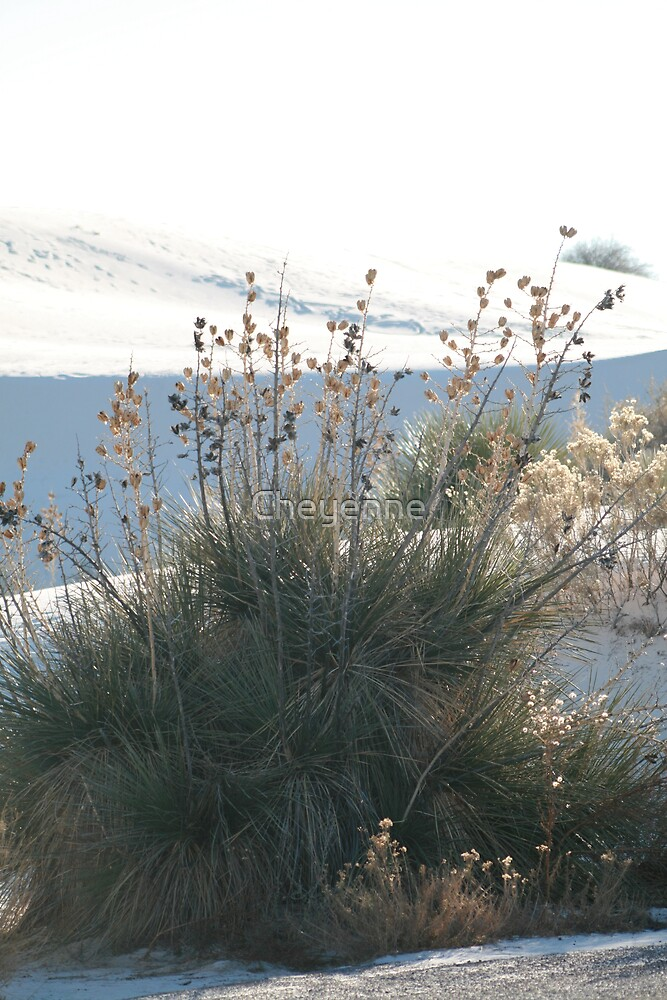 In White Sands, New Mexico by Cheyenne