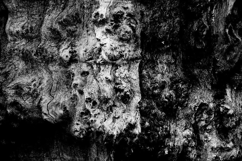 Can you see the animals? by Christian Galbally