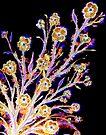 Dancing in the Moonlight - Flowers by Linda Callaghan